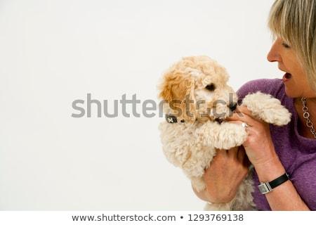 Köpek beyaz örnek dizayn sanat imzalamak Stok fotoğraf © colematt