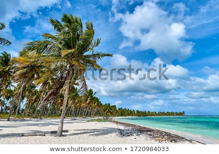 Bright horizontal image view to the turquoise sea palm trees hil Stock photo © amok