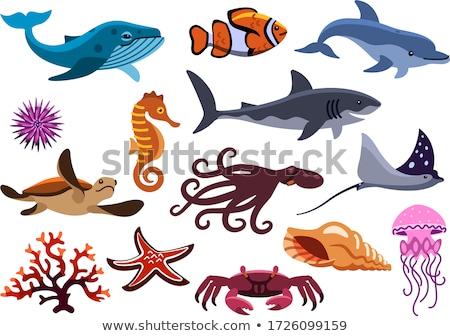 Ayarlamak deniz örnek balık doğa Stok fotoğraf © colematt