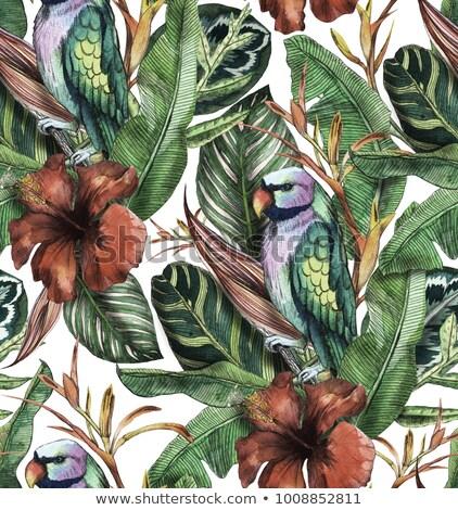 Verde hojas de palma rojo loro blanco dibujado a mano Foto stock © Artspace