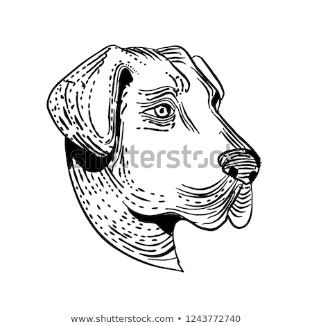 çoban · köpek · beyaz · stüdyo · evcil · hayvan - stok fotoğraf © patrimonio