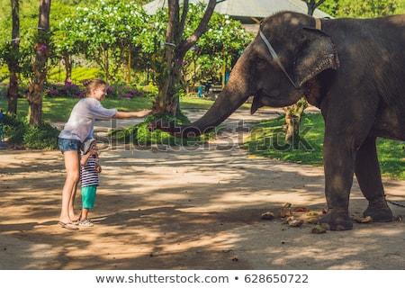 Mamãe filho elefante trópicos mulher floresta Foto stock © galitskaya