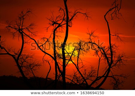 Burnt and blackened branches after bush fires in Australia Stock photo © lovleah