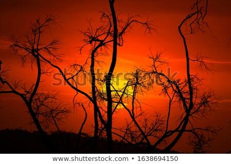 Niederlassungen Busch Australien nackt Bäume hierher Stock foto © lovleah