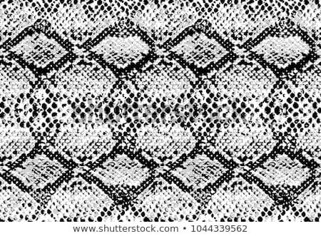 serpente · padrão · preto · e · branco · estilo · moda · abstrato - foto stock © pakhnyushchyy