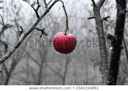 красный искушение классический художественный нагота фотография Сток-фото © dolgachov