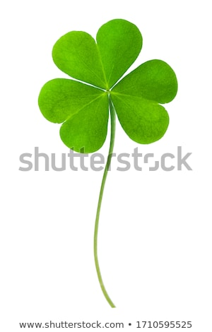 Fresh clover Stock photo © macropixel