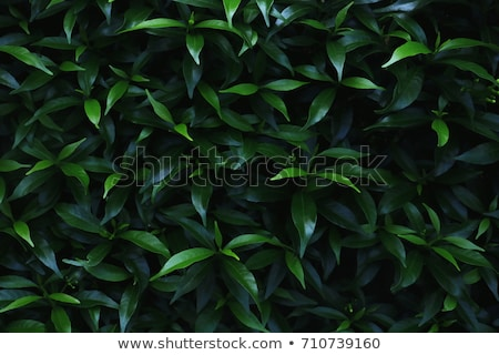 green leaves under sun background stock photo © kawing921