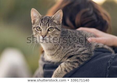 brunette · schoonheid · cute · kitten · portret · mooie - stockfoto © acidgrey