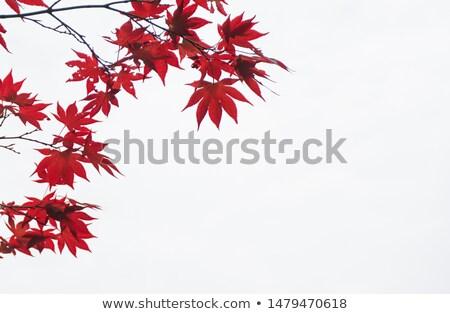 bordo · folhas · canto · isolado · branco · verde - foto stock © Grazvydas