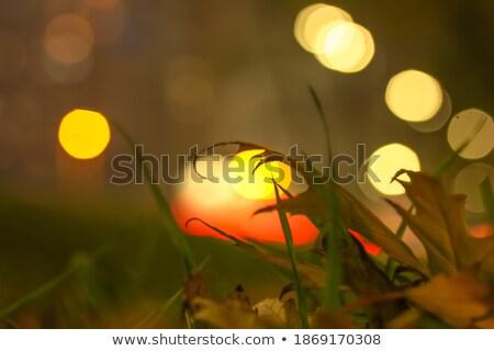 Północ łące streszczenie naturalnych środowisk drzewo Zdjęcia stock © tolokonov
