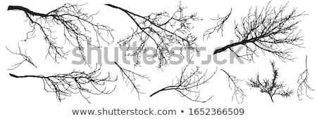 leafless branches Stock photo © pedrosala