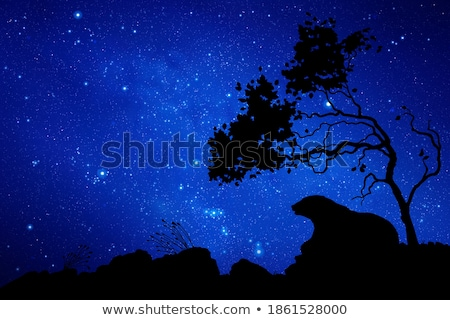Medve csillagos ég hó csillagok tél éjszaka Stock fotó © Ustofre9