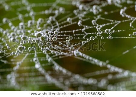 spinnenweb · kleurrijk · natuur · dier · achtergronden · macro - stockfoto © thomaseder