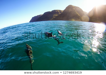 sluiten · zee · schildpad · vrouw · Blauw · masker - stockfoto © backyardproductions