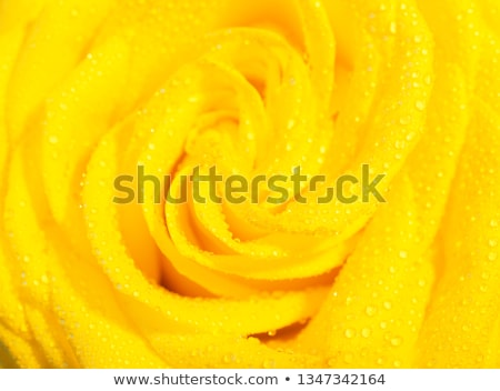 Сток-фото: красивой · цветок · капли · воды · лепестков · мелкий