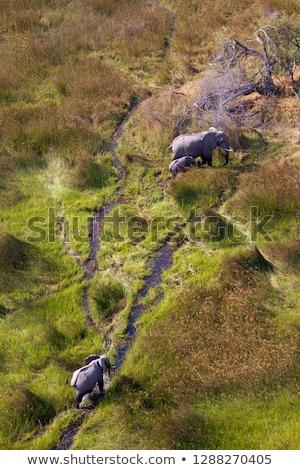 fil · safari · park · aile · seyahat · grup - stok fotoğraf © dirkr