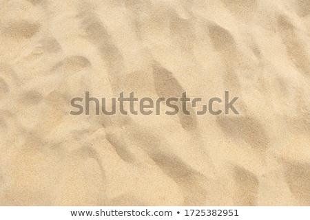 areia · deserto · ondulação · escaravelho · pegadas · verão - foto stock © mikko