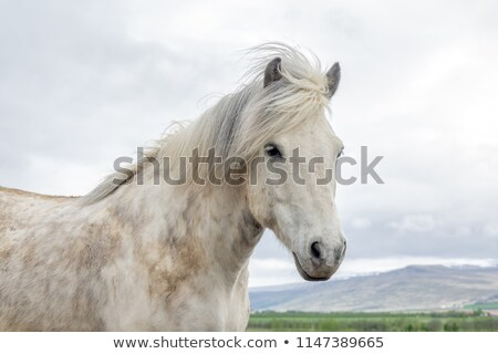 白 · ブラウン · 馬 · 山 · クローズアップ · 見える - ストックフォト © Aitormmfoto