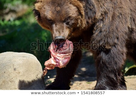 meat and bear