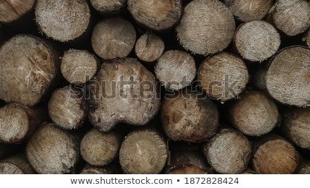 Woodstacks Stock photo © bezikus