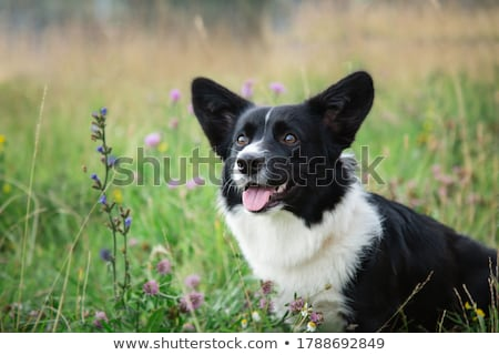 美しい · 犬 · 立って · 白 · 孤立した · コピースペース - ストックフォト © svetography