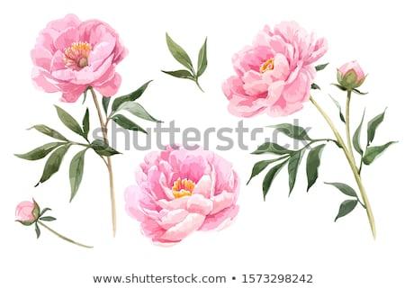 rosa · flor · primavera · verão · dom · cabeça - foto stock © racoolstudio