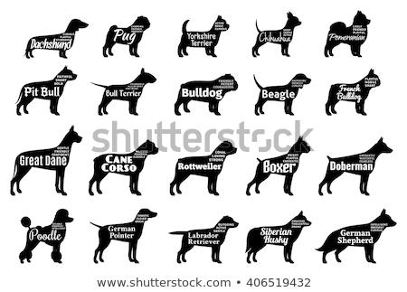 szett · fekete · sziluett · kutya · ikon · izolált - stock fotó © istanbul2009