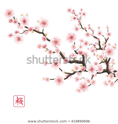 Sakura flowers set isolated. EPS 10 Stock photo © beholdereye