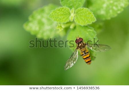 Fotoğraf bahçe alan bitki arı Stok fotoğraf © Kidza