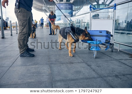 drug dog in the airport stock photo © adrenalina