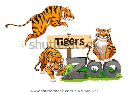 Trois tigres zoo illustration nature fond Photo stock © bluering