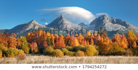 Sonbahar manzara kaya orman huş ağacı ladin Stok fotoğraf © Kotenko
