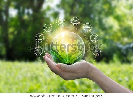 zielone · pozostawia · ikona · ilustracja · odizolowany - zdjęcia stock © oblachko