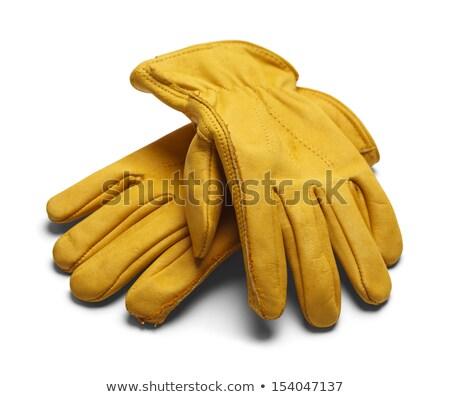 deri · işçiler · eldiven · yalıtılmış · beyaz - stok fotoğraf © dcwcreations