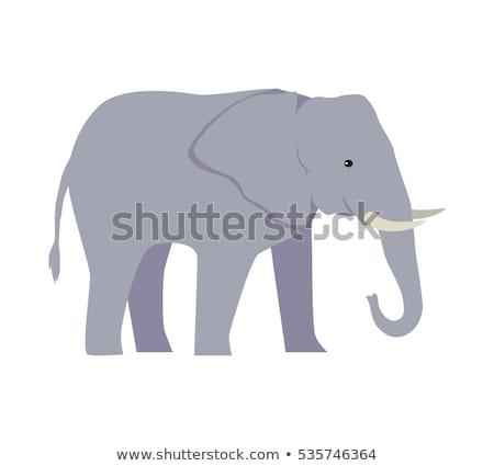 elephant cartoon large mammal forest elephant asian elephant african bush with large ears vector il stock photo © nikodzhi