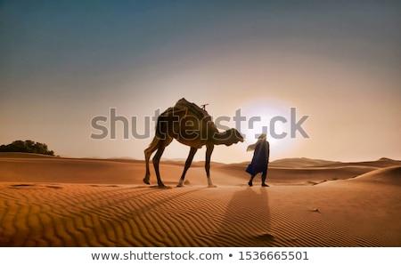 Siluet deve çöl gece örnek arka plan Stok fotoğraf © bluering