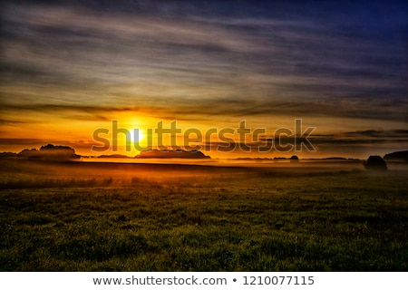 Tranquil foggy grassland at sunrise Stock photo © Juhku