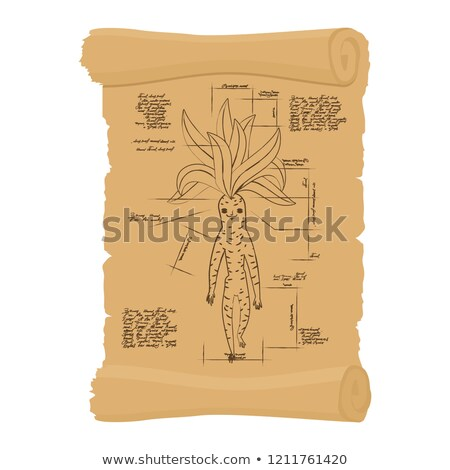 Ancient scroll  of Mandrake root. Archaic papyrus of Legendary p Stock photo © popaukropa
