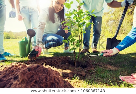 group of volunteers with trees and shovel in park Stock photo © dolgachov