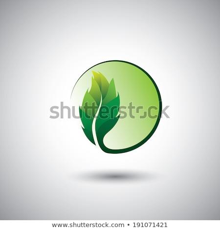 природного bio лист завода Эко символ Сток-фото © blaskorizov