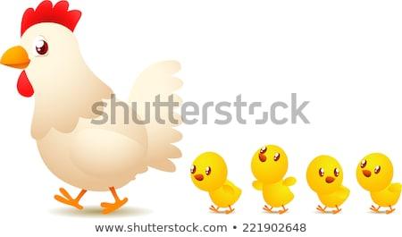 鶏 家族 5 雛 実例 ストックフォト © colematt
