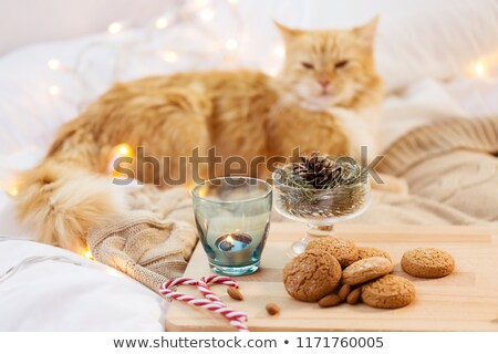 oatmeal cookies, candle, fir twig and cat in bed Stock photo © dolgachov