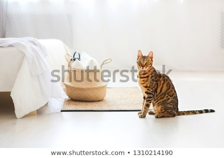 Bengal kedi yeşil gözleri yatak odası ışık arka plan Stok fotoğraf © dashapetrenko