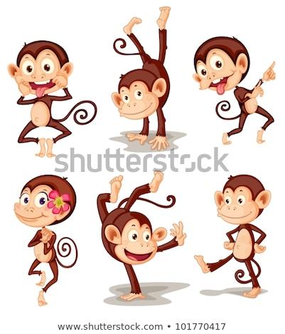 Stock photo: A group of playful monkey