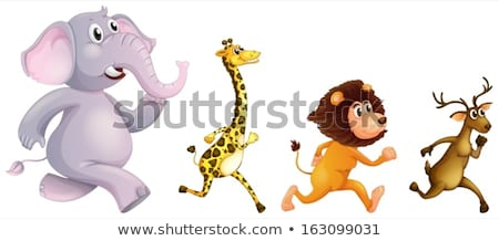 Elephant running in the woods Stock photo © bluering