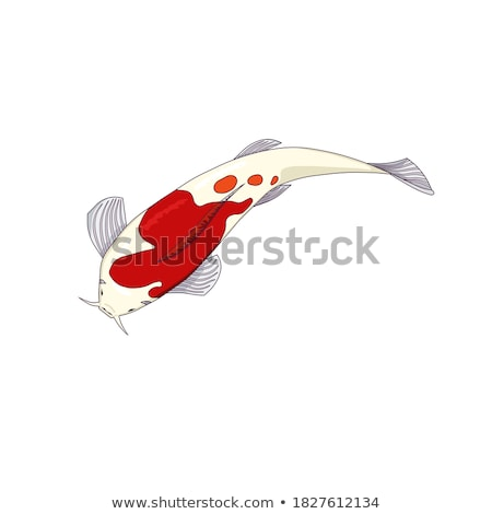Oriental White With Orange Spots Carp Koi Vector Stock photo © pikepicture