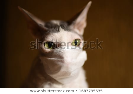 masker · witte · grappig · portret · oneven · kat - stockfoto © CatchyImages