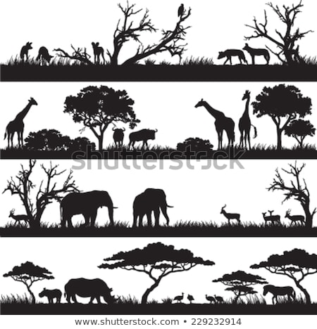 Animaux sauvage savane sunrise silhouettes animaux sauvages Photo stock © liolle