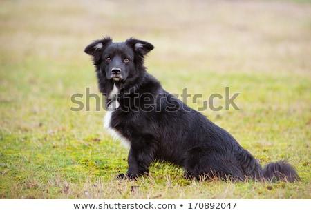 Zárt portré imádnivaló vegyes fajta kutya Stock fotó © vauvau